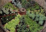 famous wagon wheel herb garden design herb garden design your