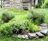 herb gardening nashville jpg