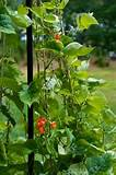 Beautiful Container Garden Vegetables, Herbs and Fruit