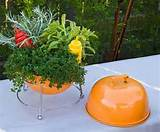 container dish herb gardening forget me not landscape design