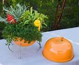 creative container dish herb gardening