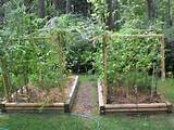 raised vegetable and herb beds in august