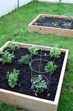 herb garden raised bed gardening
