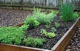 raised bed herb garden flickr photo sharing