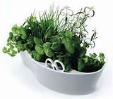 an herb container garden in your property spices and herbs