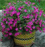 container garden ideas easy container gardens