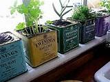 Fancy Terrarium and Potted Plants Ideas Natural Herb Windowsill Garden ...