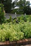 garden thyme and other herb favorites magnolia landscape and design