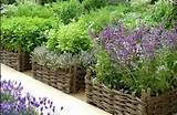 Herb Container Garden Basket Daily Mail