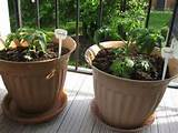 Herb Container Garden at Your Home | Home Design Gallery
