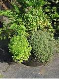 the smart container herb garden growing herbs with container