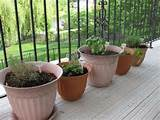 to ensure your herb container garden success home design gallery