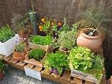 design an herb container garden the innovation diaries