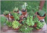 herb garden design plan herb garden design your best resource