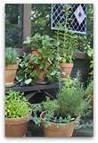 Herb Garden Planting Design - Herb Garden Layouts and Pictures