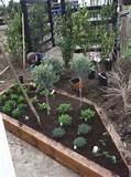 peter donegan landscaping dublin design herb garden