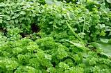 by kim willis a ground cover plant is used in place of grass or