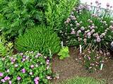 herb garden jpg