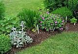 perennial herb garden: images