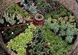 Good Medicinal Herbs for Wagon Wheel | Herb Garden Design | Your ...