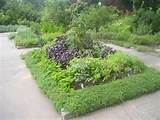 herbs are a great solution to gardening herbs provide this amazing