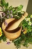 Medicinal gardens - garden of simples | GardenVisit.com, the garden ...