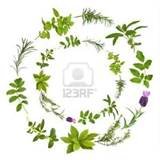 stock photo medicinal and culinary herbs in a circular design over