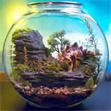 Pet Stegosaurus Dinosaur - Mini Zen Garden - Terrarium / Diorama