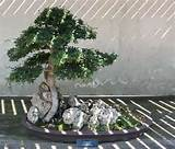 ... miniature trees is an honored artform in japan and entire gardens or