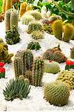 Tropical Cactus Zen Garden Royalty Free Stock Image - Image: 19305946