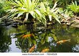 Tropical Zen Garden View With Green Plants Stock Photo 79249528 ...