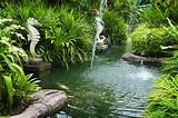 tropical zen garden stock photo szefei 3689239