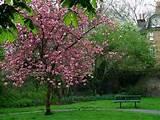 churchyard garden spring daffodils top spring churchyard garden