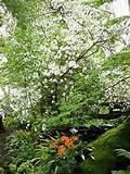 ... Shade Woodland | Michael Bates - English Country Garden Design, Inc