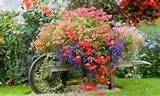 Wheelbarrow Full Of Colorful Flowers In The Countryside Outside Of ...
