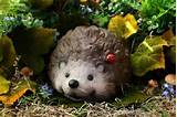 hedgehog statue concrete garden sculpture outdoor decor