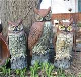 owls what a hoot garden outdoor decor lawn ornament or statue
