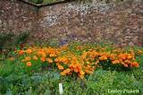 flower garden ideas and landscaping photos from visitors like you