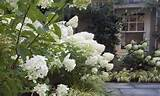 photo 04 white flower garden landscape design ideas - InKiSo.com | one ...