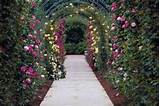 Arched trellises are perfect for growing beautiful vines.