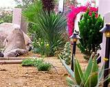 desert landscape designs require less water landscape design