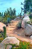 desert landscaping ideas create an oasis you can call your own the