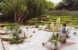 Exterior Imaginations Landscaping : Designs : Painted Desert