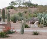 filed in desert landscape ideas