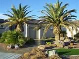 landscape design ideas how to do desert landscaping