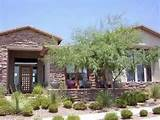 desert landscaping design with native plants. Professional designs ...