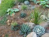 drought resistant landscaping simple landscaping ideas inkiso com