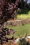Mid Century Modern- Garden Rehab - modern - landscape - san francisco ...
