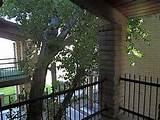 Mid-Century Modern Valle Vista Condos Designs – Garden , Picture ...