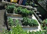 Landscape Ideas - Vegetable Garden